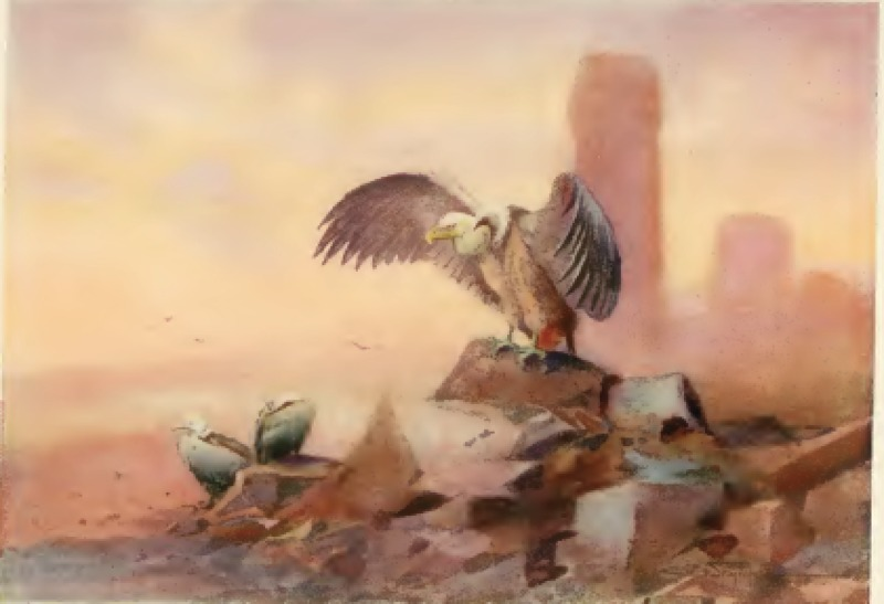 griffon-vulture.png