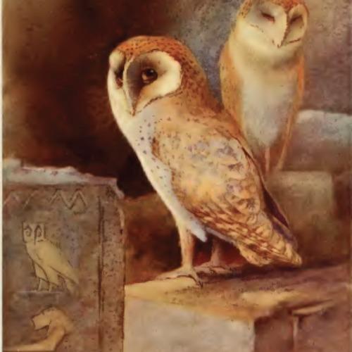 barn-owl.png